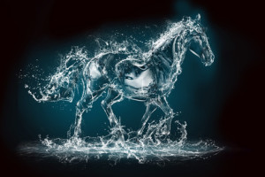 Water horse 4